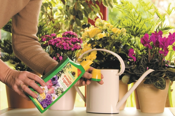 Подкормка всех комнатных растений в домашних условиях