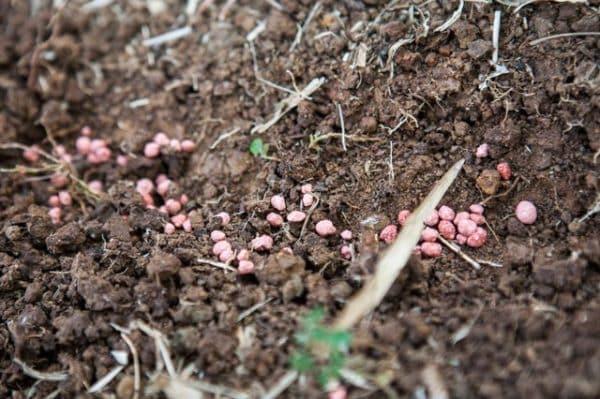 Посадочный материал на почве.