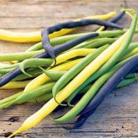 Желтые, зеленые и фиолетовые стручки фасоли