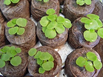 Торфяные горшочки для выращивания