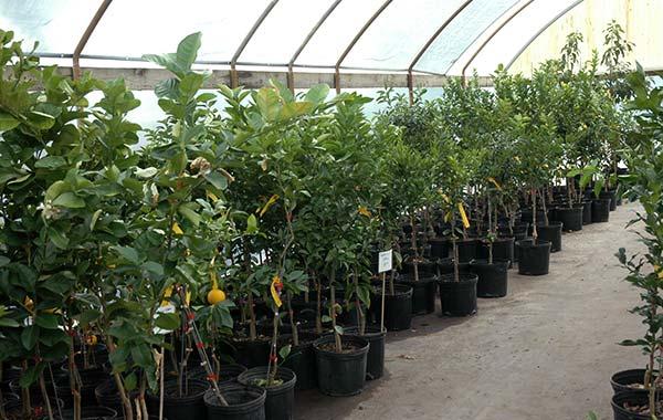 Ассортимент растений в садовых центрах.