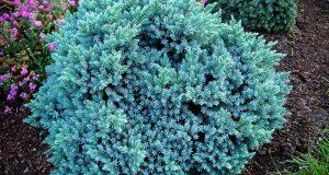 Растение в цветочной композиции.