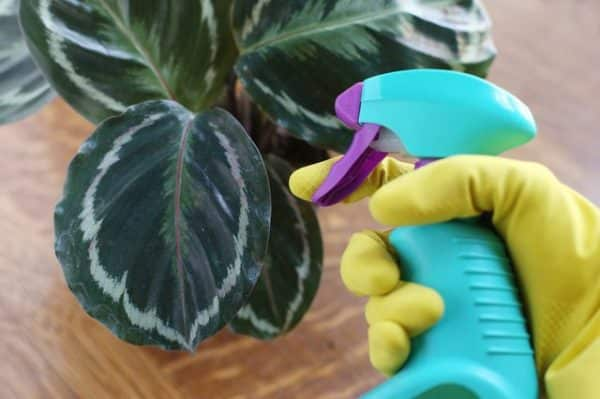 Распыление жидкости на цветок.