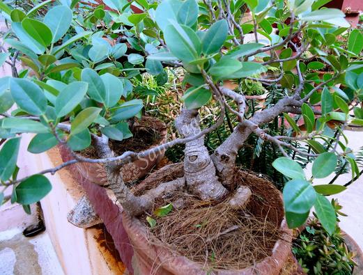 Миниатюрное растение в доме.