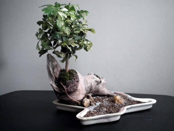 Искусство формирования зеленого растения.