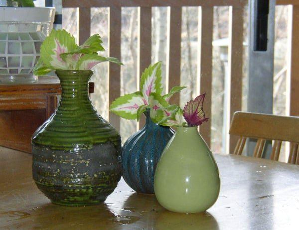 Растение прекрасно пустит корни в вазах из темного стекла.