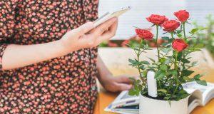Удобрять цветы нужно в период вегетации