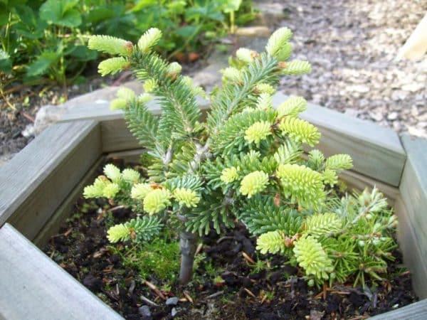 Заболевания маленького растения.