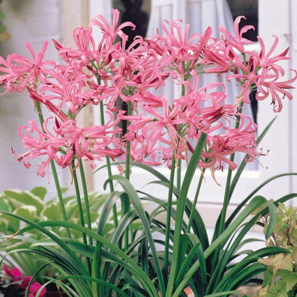 Цветок в активном периоде цветения
