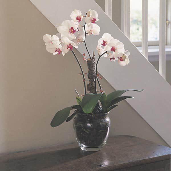 Цветочная ваза с орхидеей.