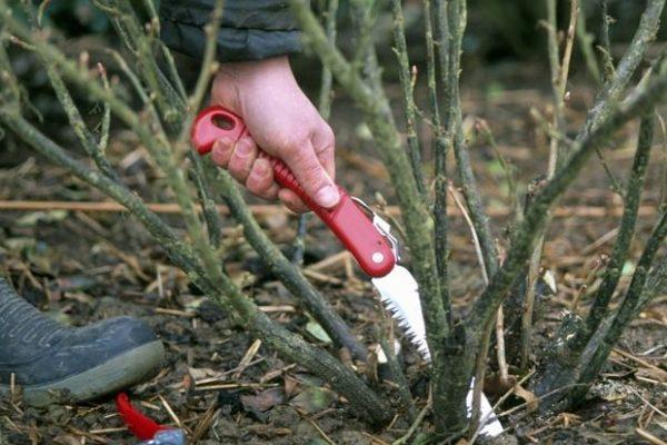 Пила-ножовка в качестве инструмента