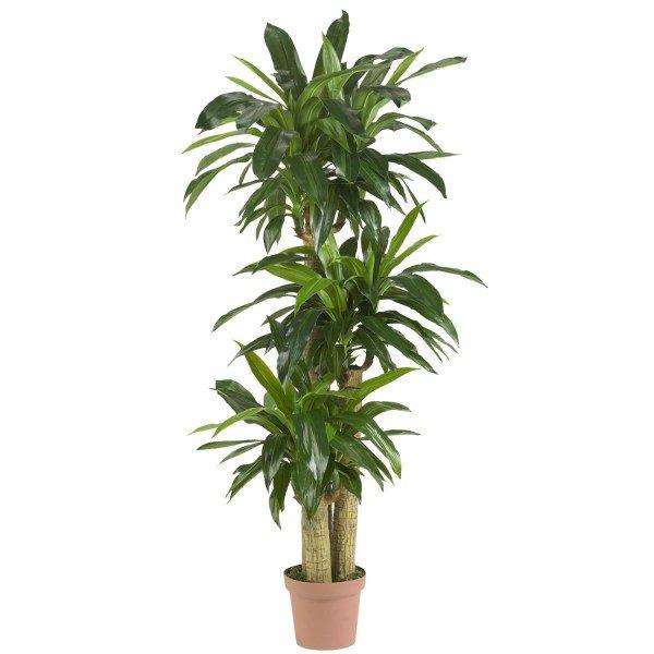 Растение в емкости из пластмассы.