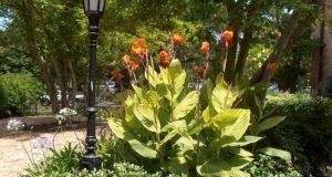 Культура — главная достопримечательность сада.