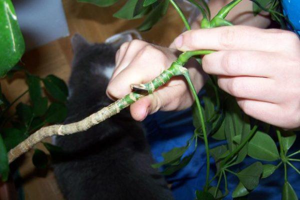 Срез верхней части растения.