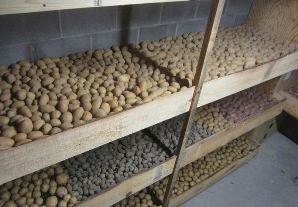 Овощи на полках.