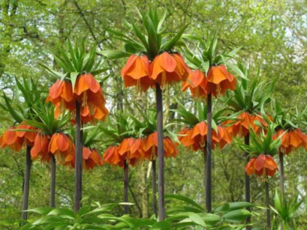 Цветущие растения в саду.
