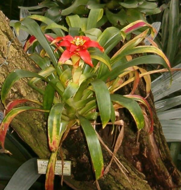Растение в природных условиях на дереве.