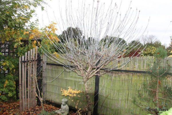Дерево с опавшими листьями осенью.