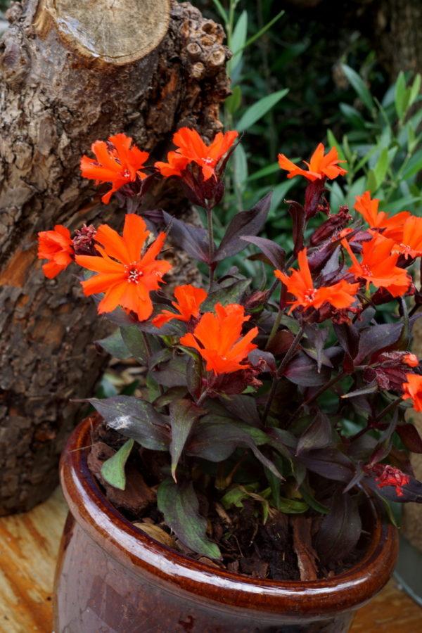 Емкость с цветущим растением.