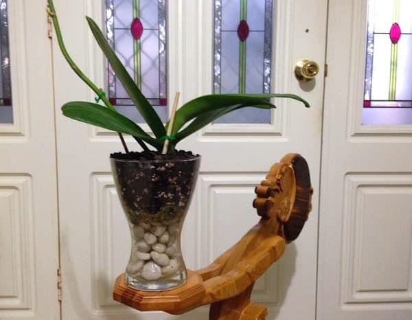Растение в декоративном вазоне.
