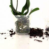 Смена контейнера и почвы для растения.