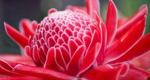Красивые соцветия лечебного растения.