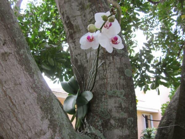 Растение- эпифит на дереве.