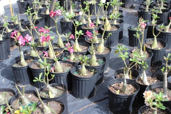 Молодые растения.