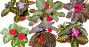 Разнообразие листовых пластин и соцветий.