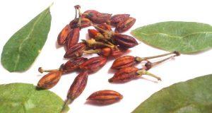 Плоды и листья растения.