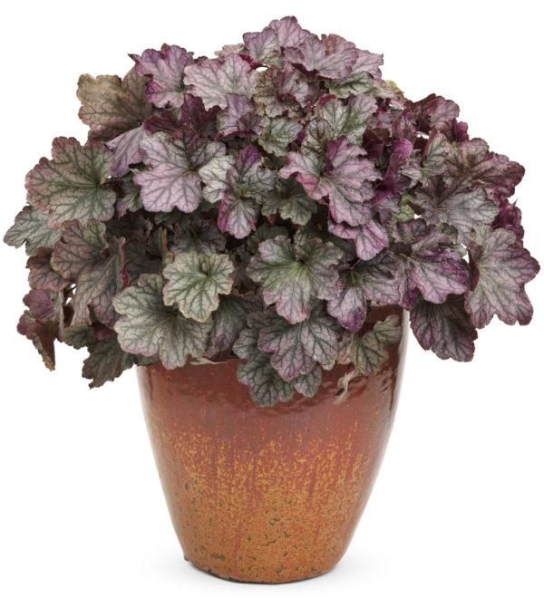 Декоративное растение в вазоне.