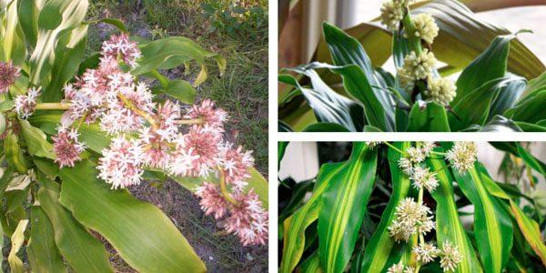 Цветы пальмы,