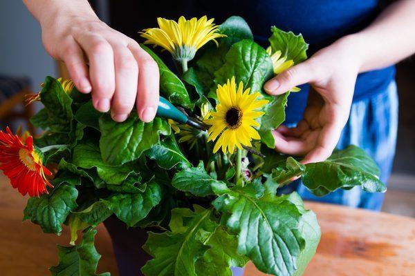 Обрезка сухих частей растения.