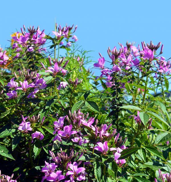 живая изгородь, созданная из цветов
