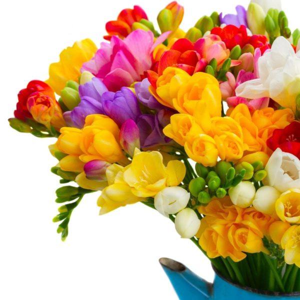 Цветы растения различного окраса.