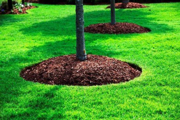 Торф подходит для защиты грядок с растениями, предпочитающими кислую почву.