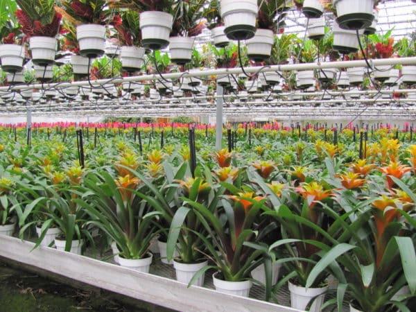 Цветущие растения в садовых представительствах.