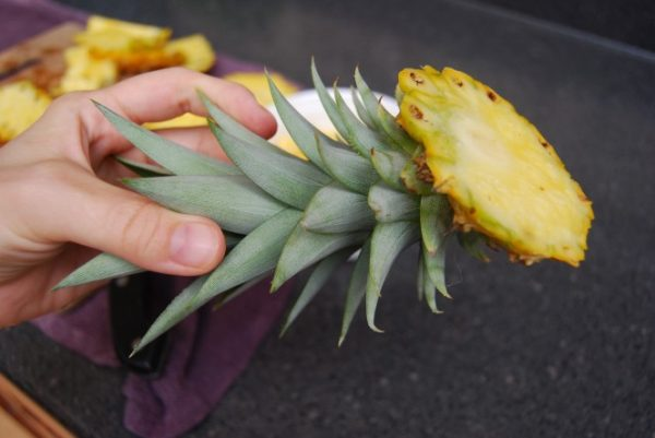 На иллюстрации изображена отрезанная верхняя часть ананаса (коронка)