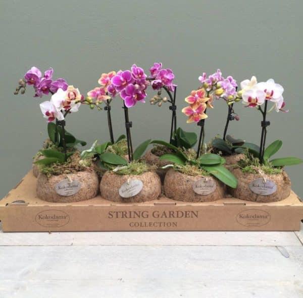 Цветущие растения в горшочках.