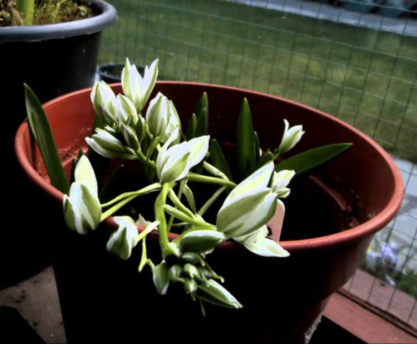 Растение на подоконнике.