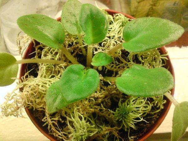 Гигроскопичность несет пользу для растений, любящих влажность