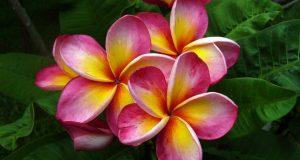внешний вид цветка