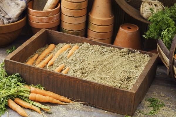 Как правильно хранить морковь на зиму в домашних условиях
