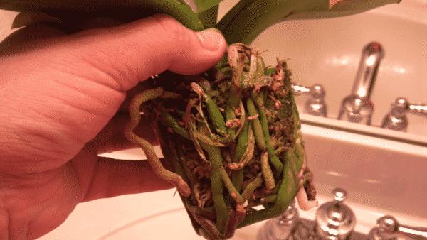 Корневая система растения.