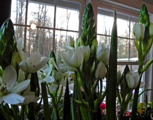 Цветущие растения в помещении.