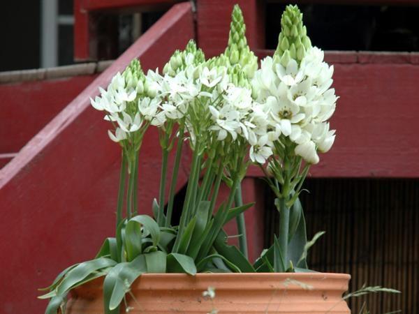 Глиняная емкость для цветка.