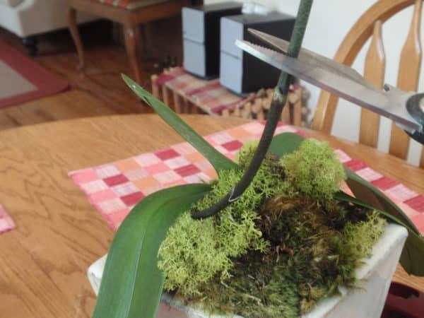 Удаление стеблей растения.