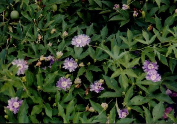 Растение на участке.