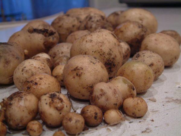 Сушка овощей после применения раствора.
