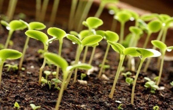 Препараты нужны для стимуляции роста и формирования корневой системы